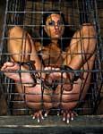 Caged.. photo 13